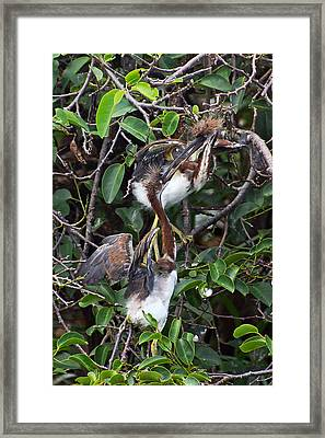 Young And Wild Framed Print