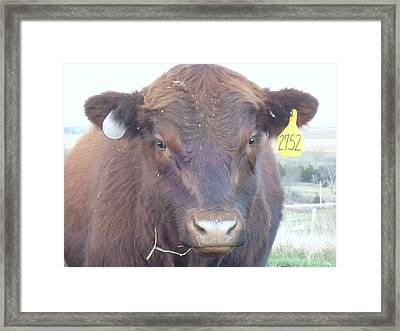 Framed Print featuring the photograph Young Angus by J L Zarek