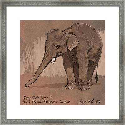 Young Asian Elephant Sketch Framed Print by Aaron Blaise