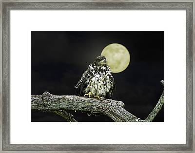 Framed Print featuring the photograph Young Bald Eagle By Moon Light by John Haldane