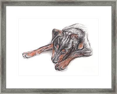 Young Black Dog Portrait Framed Print