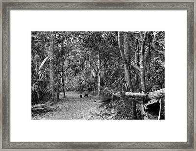 Young Boar. Highlands Hammock S.p Framed Print by Chris  Kusik
