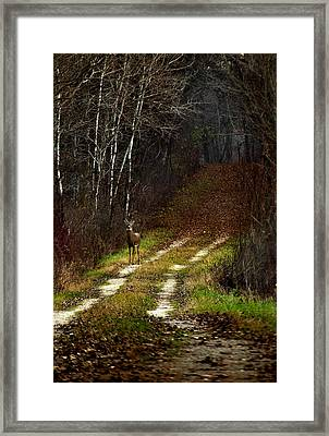 Young Buck And Autumn Framed Print by Thomas Young