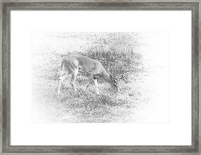 Framed Print featuring the photograph Young Buck by Jim Lepard