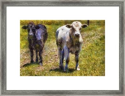 Young Bulls Framed Print by Barry Jones