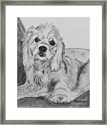 Young Cocker Spaniel Framed Print by Kate Sumners