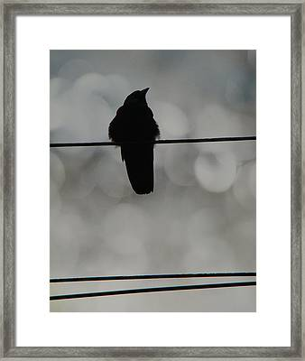 Monochrome Young Crow Framed Print
