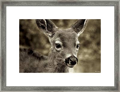 Young Curious Deer Framed Print by Alex King