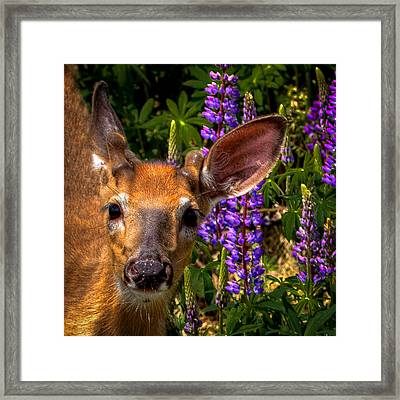 Young Deer On The Hillside Framed Print by David Patterson