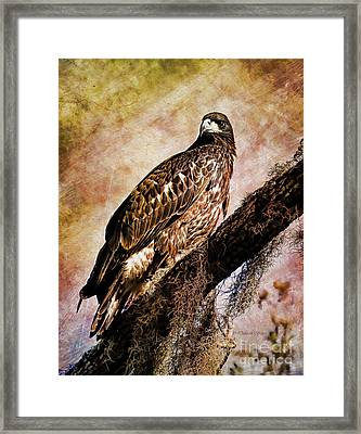 Young Eagle Pose II Framed Print