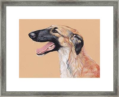 Young Female Borzoi Framed Print by Charlotte Yealey