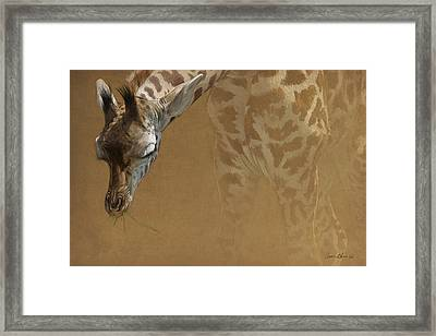 Young Giraffe Framed Print by Aaron Blaise
