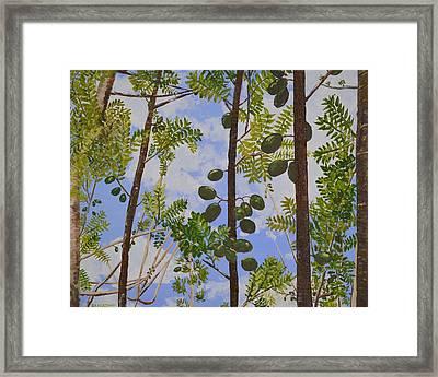 Young Guava Trees Framed Print by Dorothy Krajewski