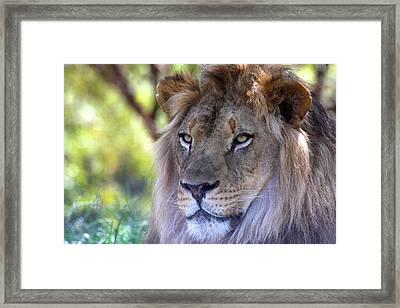 Young King In The Morning Framed Print by Ruth Jolly