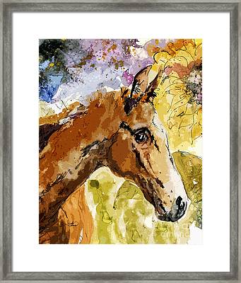 Young Life Horse Portrait Framed Print