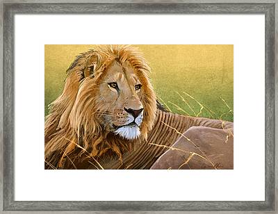 Young Lion Framed Print by Aaron Blaise