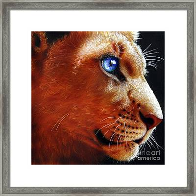 Young Lion Framed Print by Jurek Zamoyski