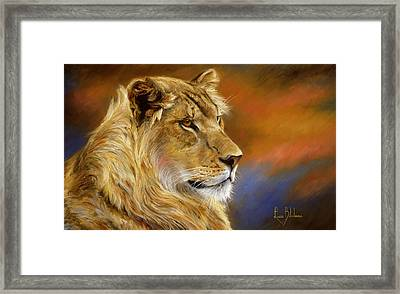 Young Lion Framed Print by Lucie Bilodeau