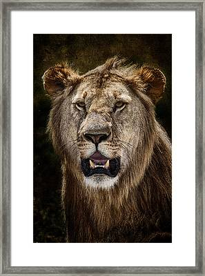 Young Male Lion Texture Blend Framed Print