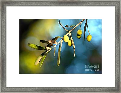 Young Olive On A Branch Framed Print by Leyla Ismet