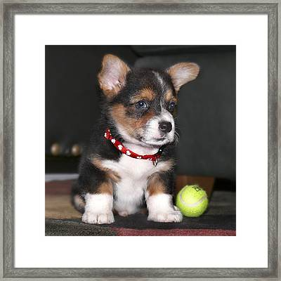 Young Otis Ray Framed Print by Mike McGlothlen