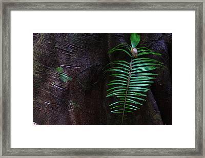 Palm Leaf Against Tree Framed Print