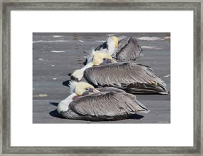 Young Pelicans Framed Print by Heidi Smith