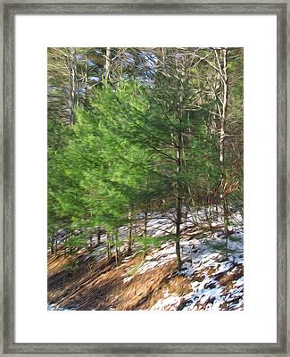 Young Pine Tree Framed Print by Lanjee Chee