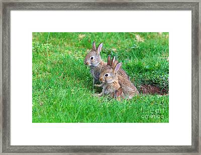 Framed Print featuring the photograph Young Rabbits by Nick  Biemans