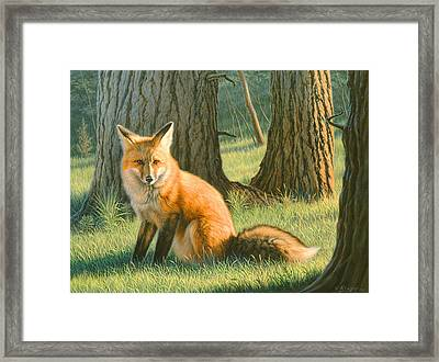 Young Red Framed Print by Paul Krapf