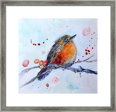 Young Robin Framed Print by Beverley Harper Tinsley