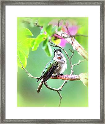 Young Ruby - 6761- 8x10 Framed Print