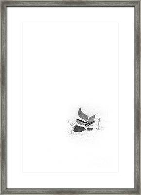 Young Sea Grape Bw Framed Print