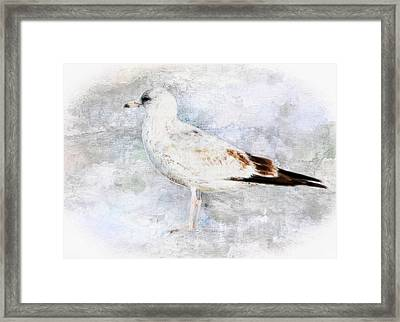 Young Seagull Framed Print by Barbara Chichester