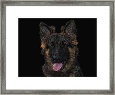 Young Shepherd Framed Print by Joachim G Pinkawa