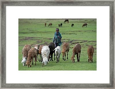 Young Shepherd Near Debarq Framed Print by Tony Camacho