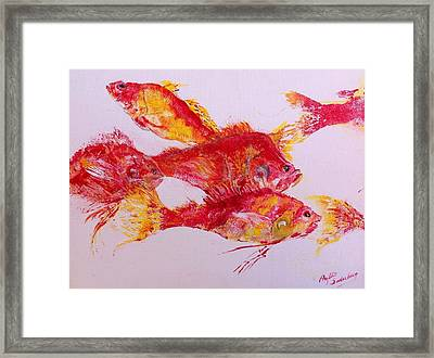 Young Snapper Family Framed Print by Phyllis Soderberg