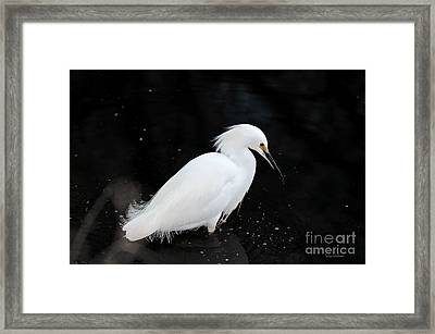 Young Snowy Egret Framed Print