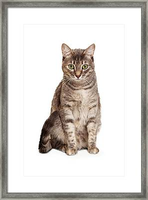 Young Tabby Cat Sitting Looking Down Framed Print by Susan Schmitz