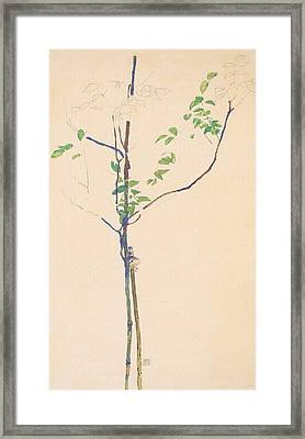 Young Trees With Support Framed Print