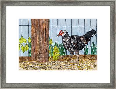 Young Tugen Eating Worm Framed Print by Sandee Johnson