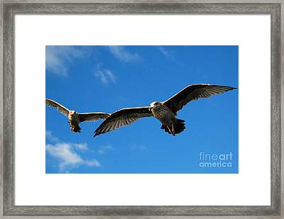 Young Wings Framed Print