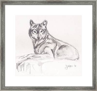 Young Wolf Framed Print by John Keaton