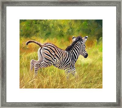 Young Zebra Framed Print by David Stribbling