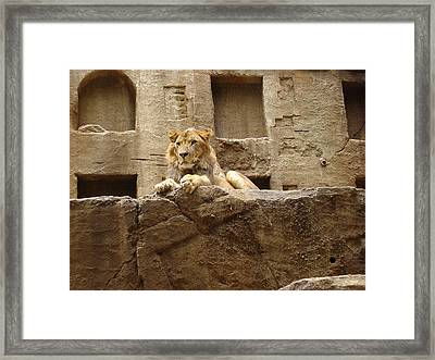 Your Kingdom Come Framed Print by James Tanyu
