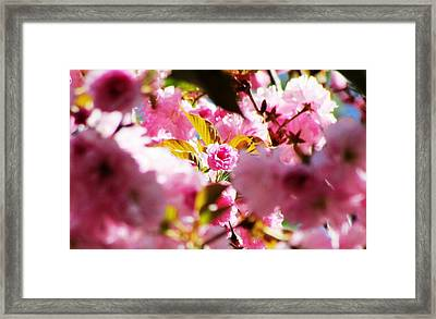 Your The One Framed Print by Will Boutin Photos