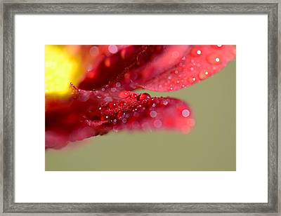 You're Everywhere Framed Print by Melanie Moraga