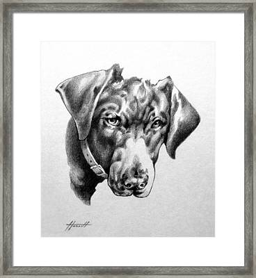 You're Kidding Framed Print by Patricia Howitt