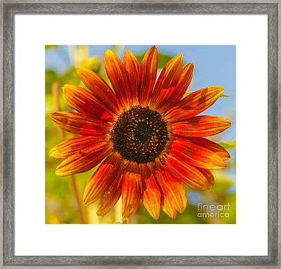 Youthful Framed Print