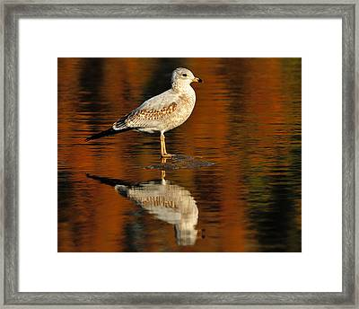 Youthful Reflections Framed Print by Tony Beck